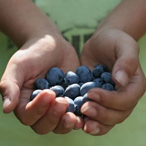 600px-Weather_tomorrow-_sunny_with_plentiful_blueberries